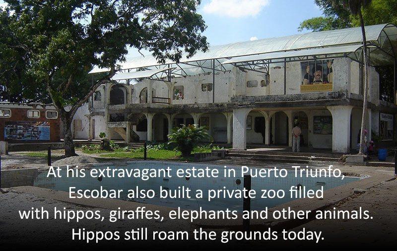 pablo-escobar-zoo