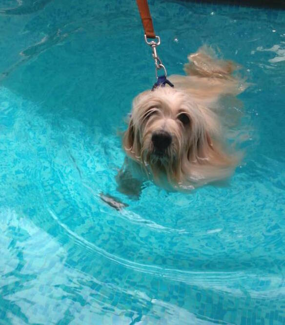 Macho in swimming pool